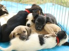 Contra câncer de mama, 'Outubro Rosa Pet' atende cães e gatos na BA