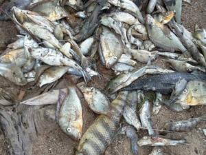 Peixes foram econtrados mortos no rio Araguari, na tarde de domingo (24) (Foto: Moroni Guimarães/Arquivo Pessoal)