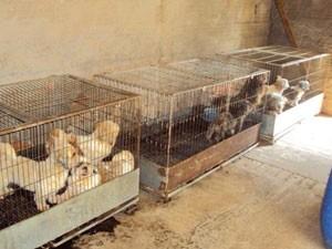 Animais eram vendidos em pet shop em shopping da cidade (Foto: Arquivo/ Polícia Militar de Meio Ambiente)