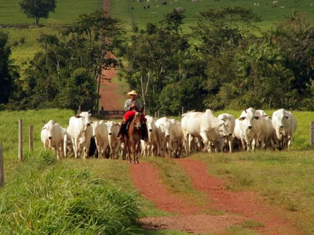 Fazenda Rancho Fundo é modelo de sustentabilidade no nordeste paraense. (Foto: Divulgação)