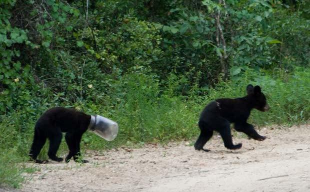 Filhote de urso foi flagrado com cabeça entalada em um pote. (Foto: AP)
