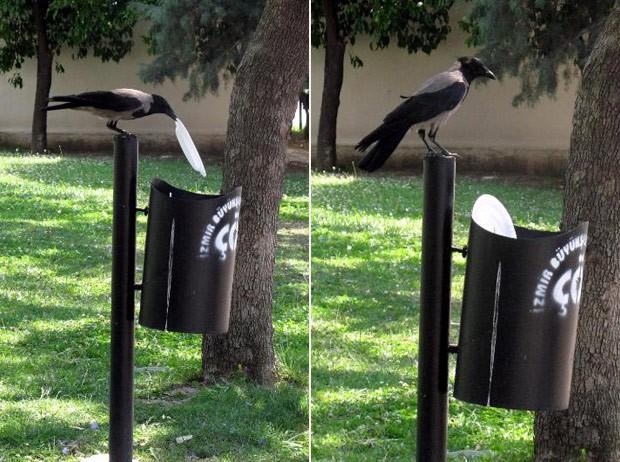 Corvo fez sucesso ao recolher lixo de gramado e colocá-lo em lixeira (Foto: Reprodução/Reddit/Sencerb88)