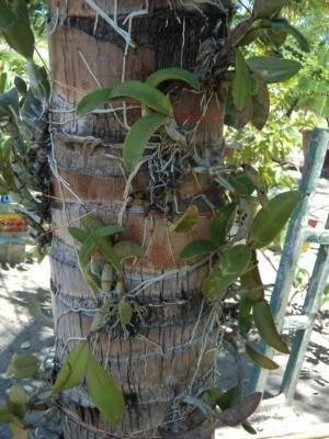 Suspeita mantinha orquidário sem autorização ambiental (Foto: Divulgação/PMA)