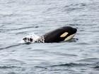 Amante da natureza faz expedições para registrar animais no litoral de SP