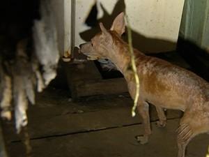 Família se mudou para novo endereço e abandonou animais de estimação em Belém. (Foto: Reprodução/TV Liberal)