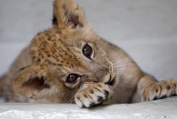 Amado G1 - Site reúne fotos dos filhotes 'mais fofos do ano' - notícias  SY93