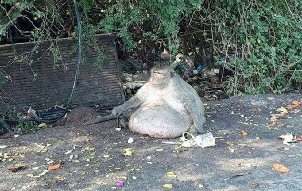 'Tio Gordo' passará por checagem veterinária para determinar se está doente (Foto: Reprodução/Facebook/Conservação de Parques e Vida Selvagem da Tailândia)