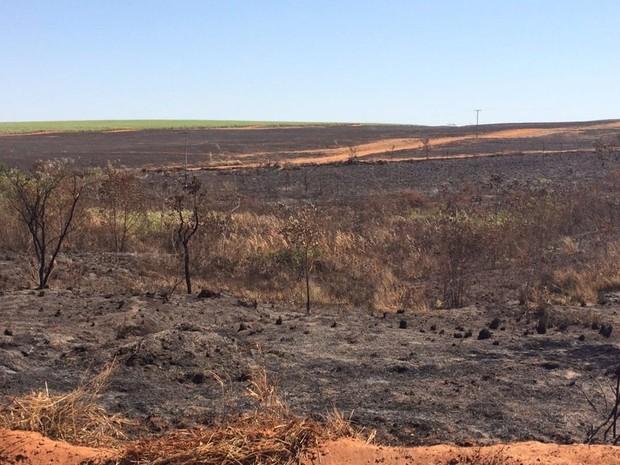 Parte da área que pegou fogo na região de Palestina (Foto: Graciela Andrade/TVTEM)