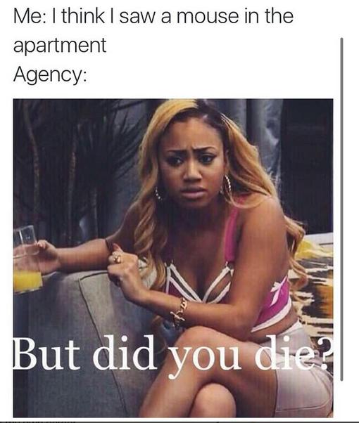"""""""Eu: 'acho que vi um rato no apartamento'. Agência: 'mas você morreu?'"""" (Foto: Instagram/Reprodução)"""