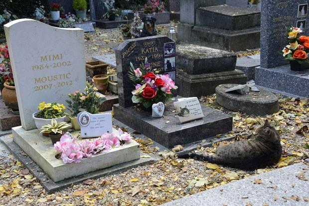 Gato foi flagrado descansando ao lado do túmulo de um felino em Asnieres-sur-Sein (Foto: Bertrand Guay/AFP)