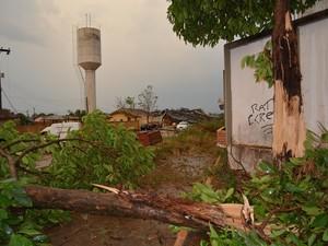 Árvore teria sido a primeira a cair, derrubando o primeiro poste  (Foto: Mary Porfiro/G1)
