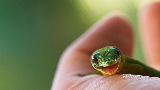 Supercolorida, a pequena cobra parece dar um sorriso (Foto: Sébastien Del Grosso/onebigphoto.com)