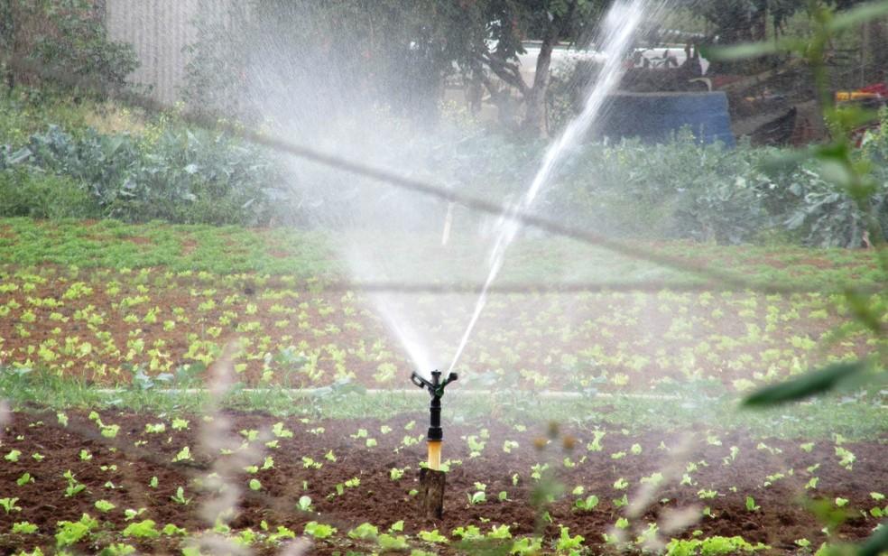 Irrigação de plantações em área do Incra 9, a cerca de 500 metros da margem do reservatório do Descoberto (Foto: Alexandre Bastos/G1)