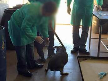 Funcionário se abaixa para pegar cão para treinamento (Foto: G1)