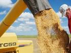 Apenas 16% da soja safra 2014/15 de MT foram vendidos no mercado futuro