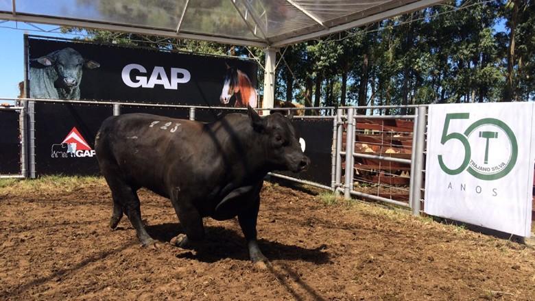 touro-gap-trajano (Foto: Trajano Leilões/ Divulgação)