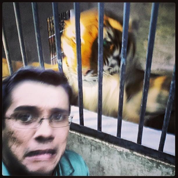 Marcos Paiva alimenta o tigre do Zoológico de Bauru (Foto: Arquivo Pessoal)