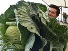 Lista reúne repolho de quase 24 kg e mais vegetais gigantes