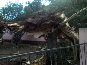 Árvore caiu sobre residência em Bossoroca (Foto: Divulgação/Brigada Militar)