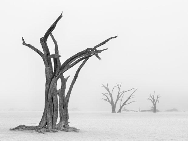 Deadvlei, na Namíbia, só tem neblina algumas vezes por ano e uma dessas foi capturada por Marsel van Oosten (Foto: Marsel van Oosten/www.tpoty.com/BBC)
