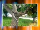 Cobra de estimação é deixada em praça e assusta moradores de Assis