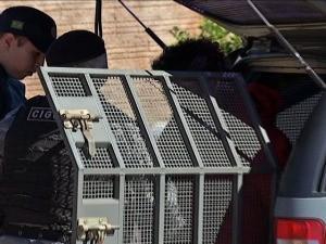 Homem esfaqueado invade casa para se esconder e é morto a tiros em MS (Foto: Reprodução/TV Morena)