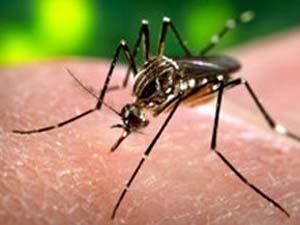 Para combater à dengue, agentes vão visitar 25 mil imóveis em Curitiba (Foto: BBC)