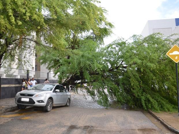 Árvore tomba e cai por cima de carro no bairro do Bessa, em João Pessoa  (Foto: Walter Paparazzo/G1)