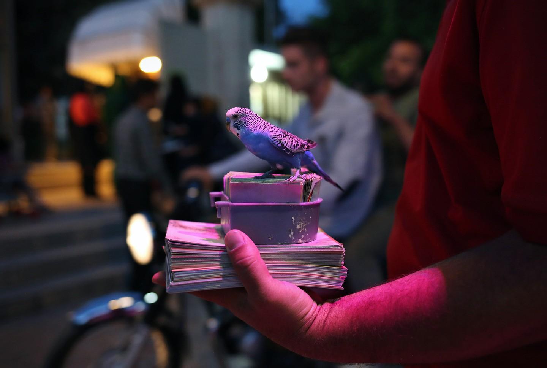 Um periquito espera clientes para escolher um cartão e ler a sorte. (FOTO: REPRODUÇÃO)