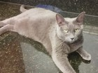 Gato sobrevive a 36 dias em caixa após família se mudar para o Havaí