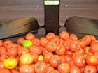 Preço do tomate sobe 93% e Vitória tem a 4ª cesta básica mais cara