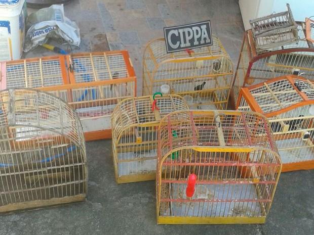 Operação apreendeu animais silvestres em bairros de Porto Seguro (Foto: Divulgação/Polícia Ambiental de Porto Seguro)