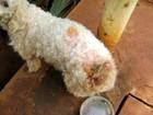 Polícia resgata oito cachorros em condições precárias em casa de MS