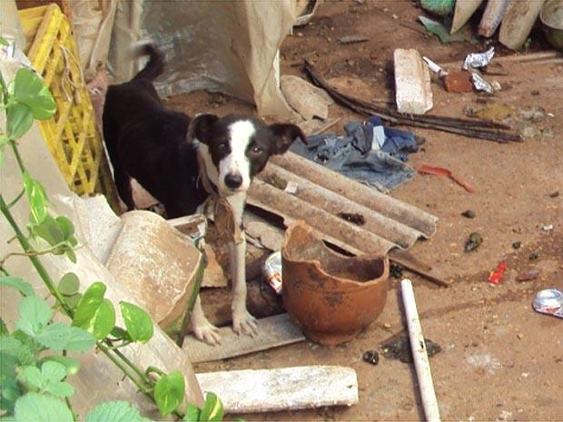 Cachorro estava amarrado com pedaço de tecidos em Jaboticabal, SP (Foto: Divulgação/Polícia Ambiental)