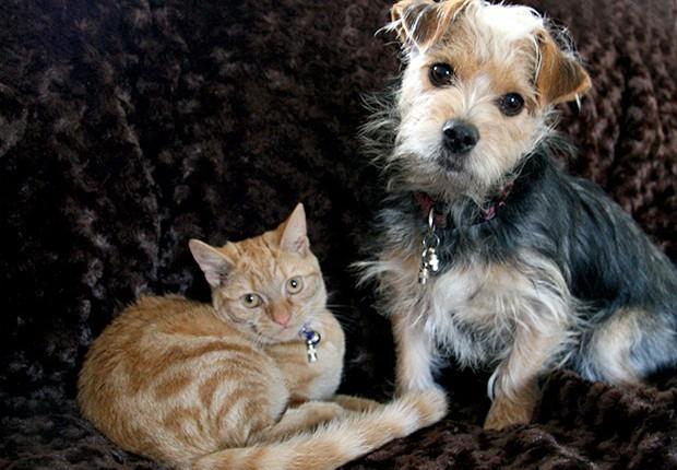 Animais de estimação  (Foto: SXC)