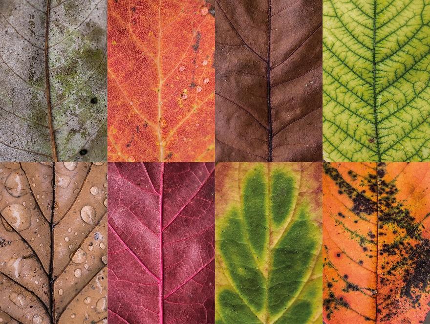 folhas outono 4 (Foto: Carola Becker)