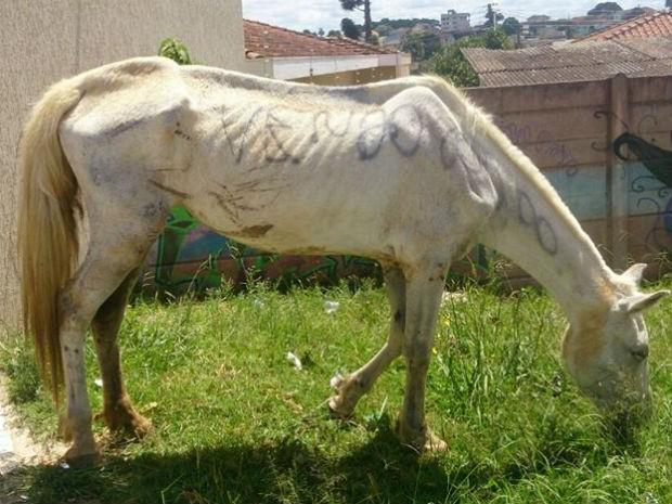 No corpo do cavalo, estava escrito 'Vendo R$ 800' (Foto: Luana Dalzotto)
