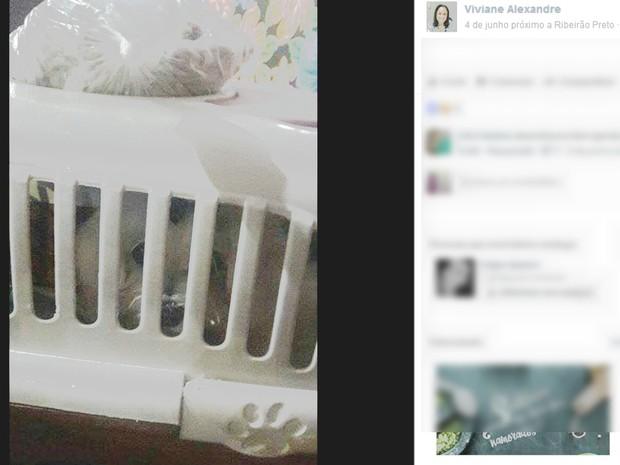 Bingo em quermesse teve cachorro como premiação (Foto: Reprodução/Facebook)