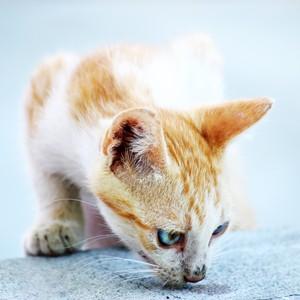 Gatos também sofrem de alergia, que podem resultar em cravos e espinhas (Foto: Free Images)