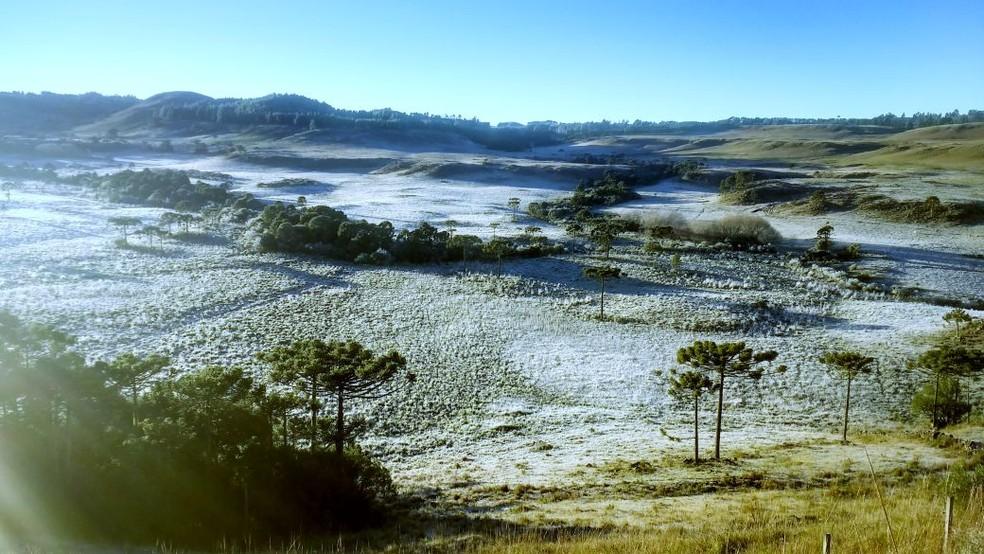 Geada deixou parte da vegetação branca na Serra de SC (Foto: Mycchel Hudsonn Legnaghi/São Joaquim Online)