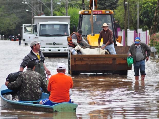 Cheia do Rio dos Sinos deixou 500 famílias desalojadas em São Leopoldo (Foto: Nilson Winter/ Divulgação Prefeitura de São Leopoldo)