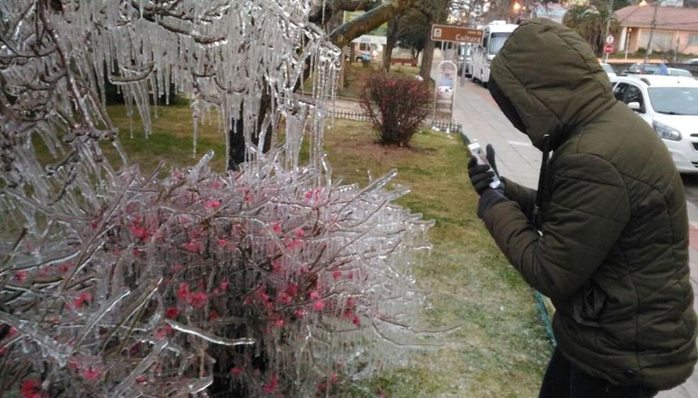 Turista tira foto de árvore congelada em São Joaquim (Foto: Wagner Urbano/Divulgação)