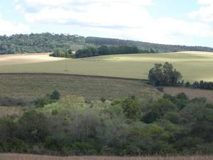 Marcas surgiram no meio da plantação de milho, em SC (Foto: Marcelo Franzosi)