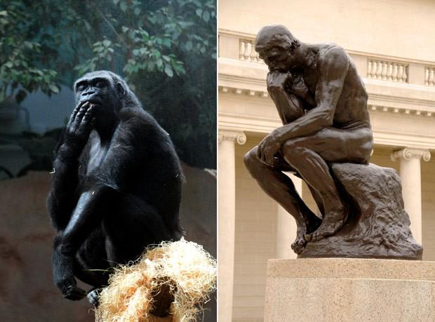 Gorila foi fotografado em pose que lembra a obra o Pensador (Foto: Michal Cizek/AFP e Wikimedia Commons)
