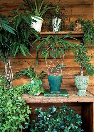 No aparador, os vasos trazem orquídea chuva-de-ouro, fícus-nigra treliçada e minifícus. Na prateleira, orquídea cimbídio, pata-de-elefante e ripsális. Sob o aparador, clúsia e, à esq., um exemplar adulto de fícus-nigra tomado pela forração rosinha-de-sol. (Foto: Casa e Jardim)