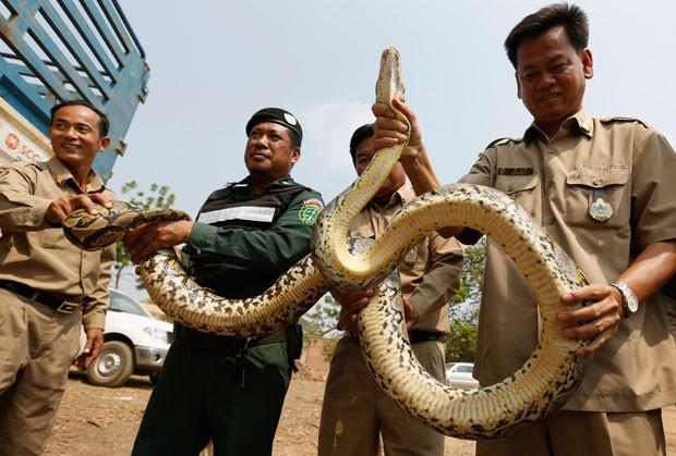 Polícia também aprendeu 17 serpentes píton (Foto: Samrang Pring/Reuters)