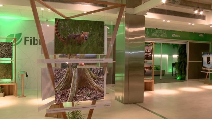 Exposição 'A Floresta Sob Um Novo Prisma' (Foto: Divulgação/ TV Gazeta ES)