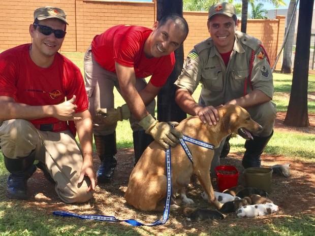 Bombeiros resgatem cadela e sete filhotes de dentro de bueiro Goiânia Goiás (Foto: Divulgação/Corpo de Bombeiros)