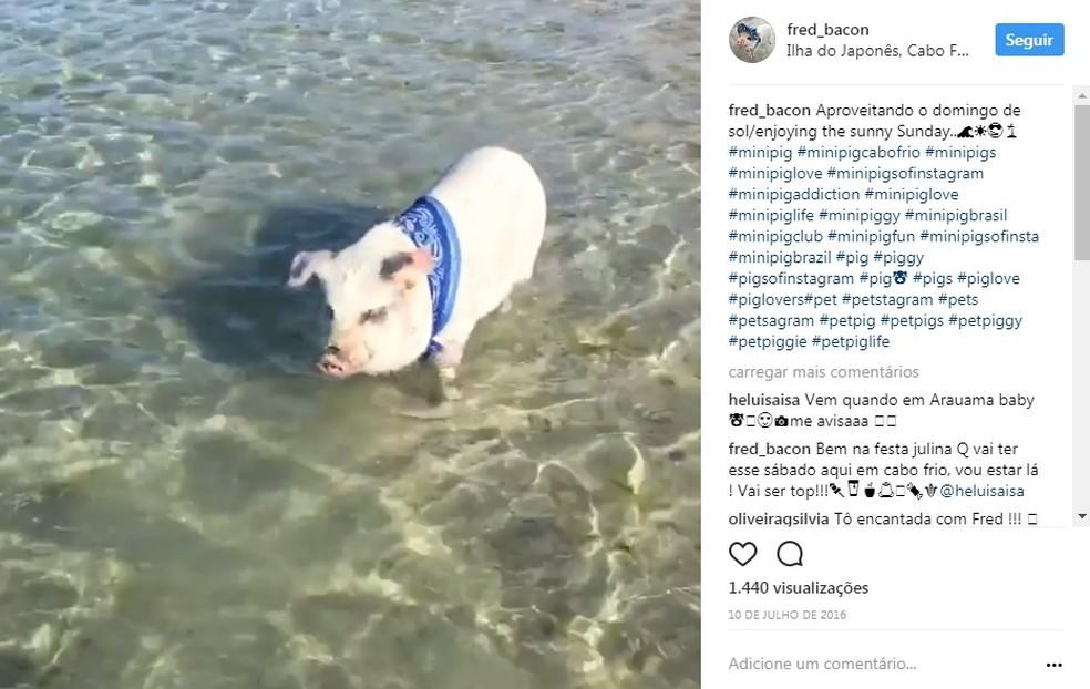 Passeio do Fred Bacon na praia (Foto: Instagram/Reprodução)