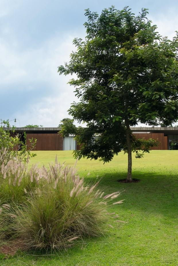 Outro ângulo Na parte mais baixa do terreno, capim-do-texas ao lado de uma acácia. Repare no extenso gramado de grama-esmeralda (Foto: Cacá Bratke / Editora Globo)
